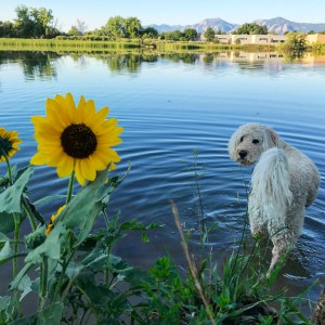 A Summer Wrap-Up and What's Next in the Boulder Real Estate Market